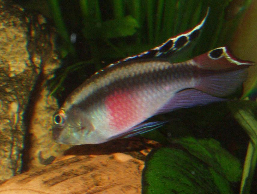 fischtuberkulose anzeichen im aquarium